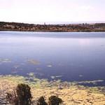 Dog Dam Fly Fishing Lake