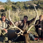 Trophy Elk